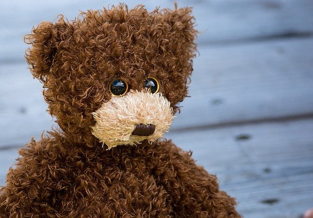 Brown teddy bear with a white nose
